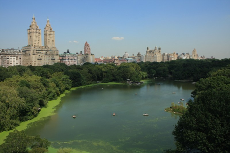 The view over Central Park