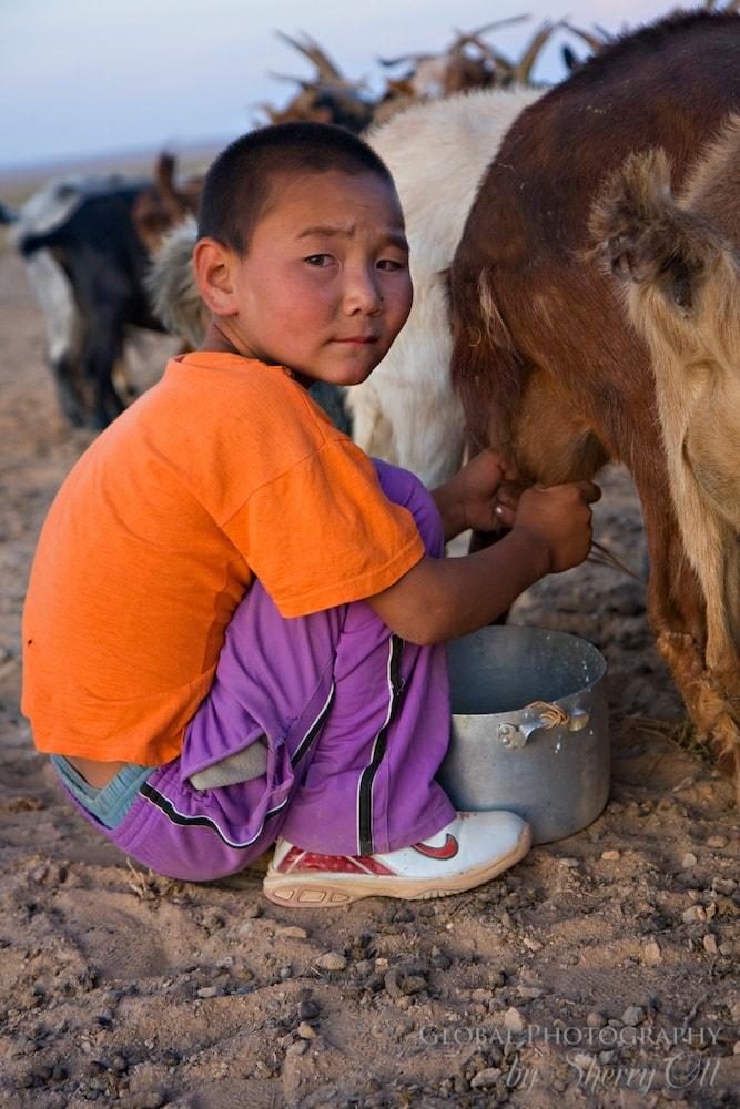 A boy milks goats in the Gobi Desert