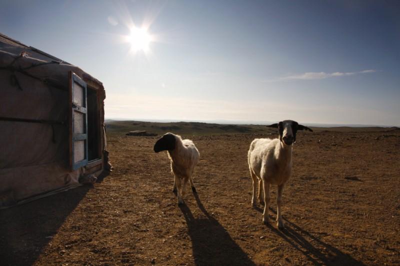 goats et. al