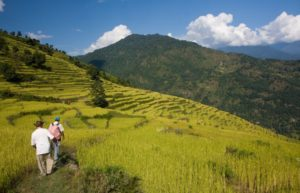Nepal rice terraces