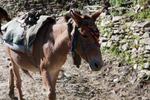 Donkey Aroma