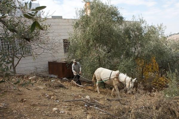 horse plow