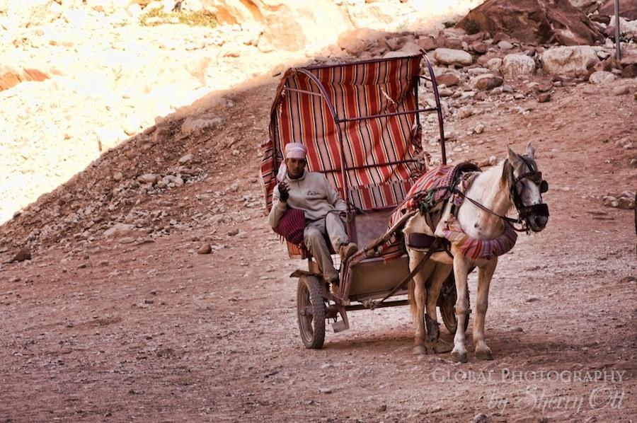 merchant Petra horse