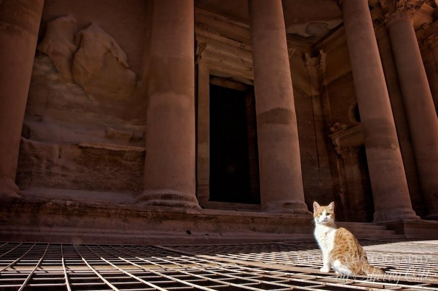 Petra Cat