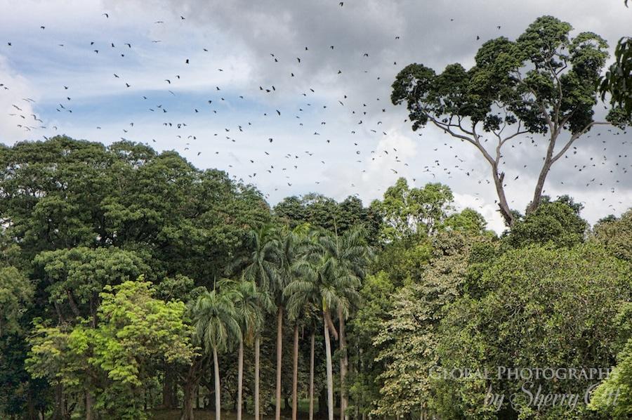 Bats circling