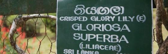 Glorius and Superb