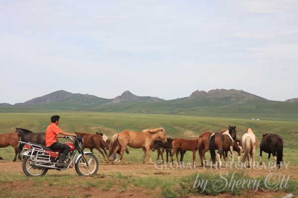 motorcycle mongolia
