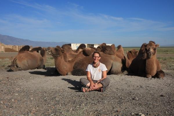 camels mongolia