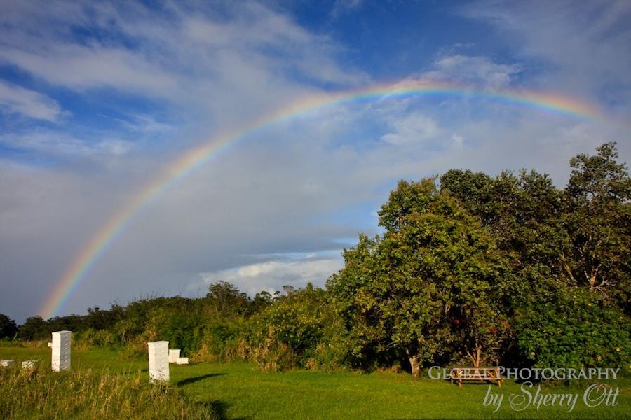 rainbow beehive