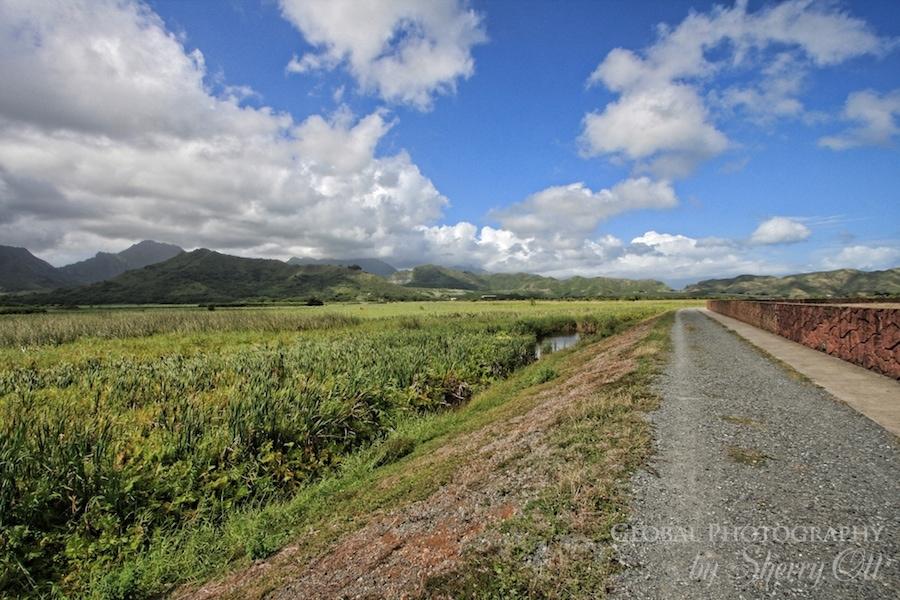 oahu trail