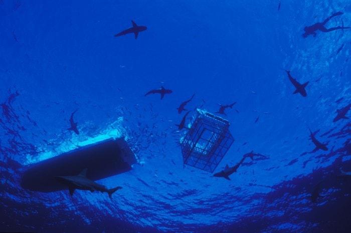 shark cage dive oahu hawaii