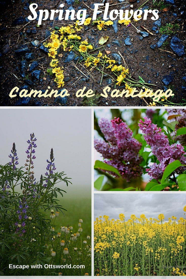 The Best Time to Walk the Camino de Santiago Pilgrimage