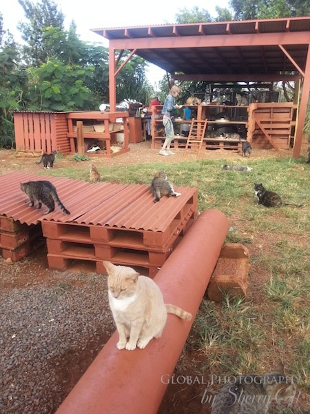 Animal rescue hawaii for Diy cat playground