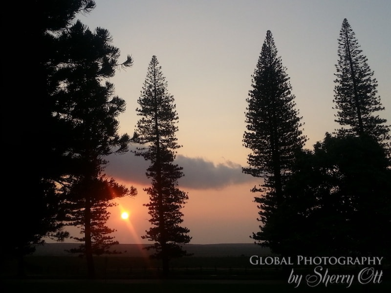norfolk pines lanai hawaii