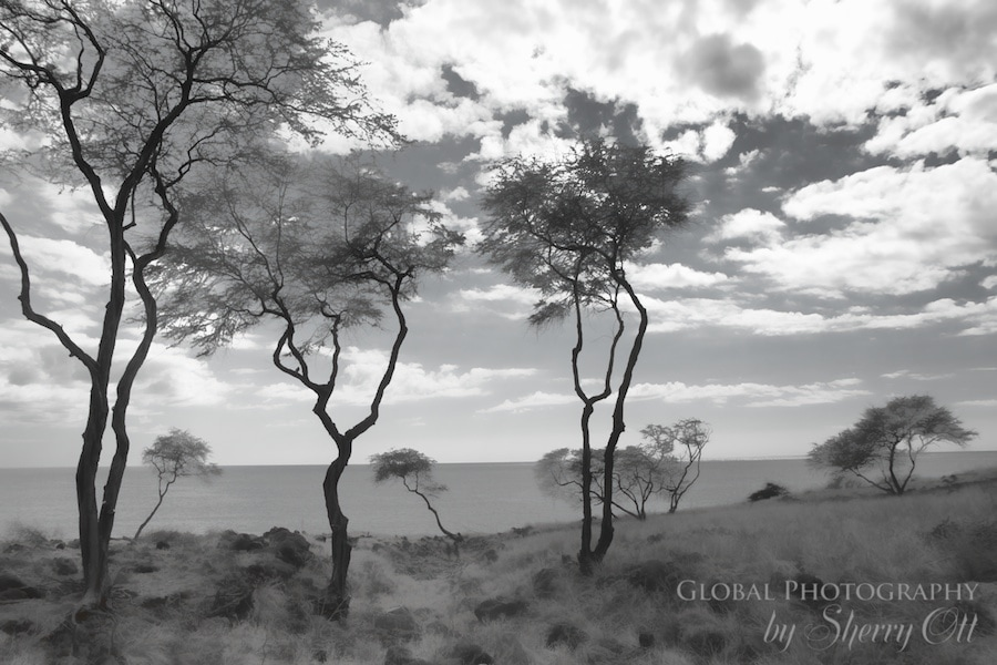 lanai trees