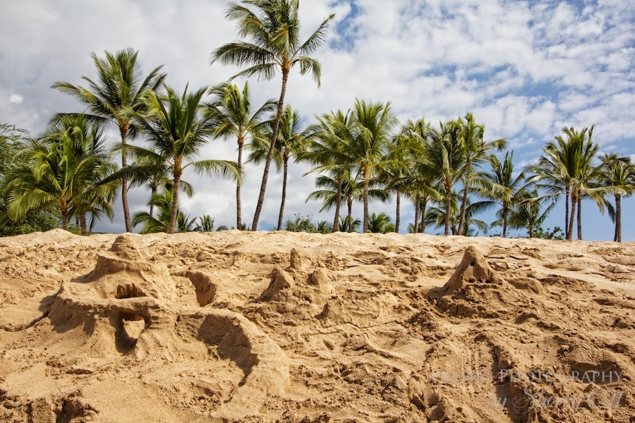 sand castles and palm trees