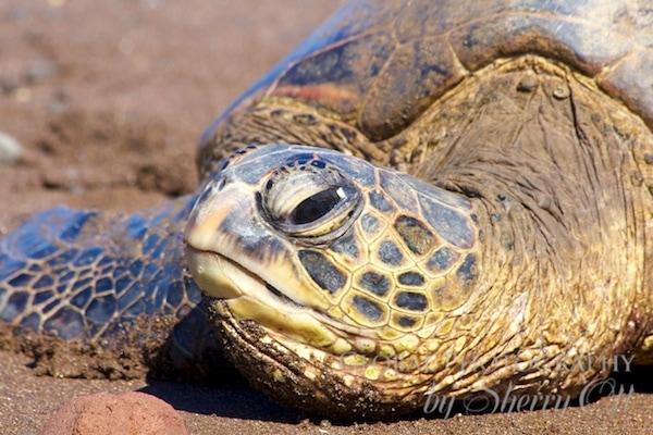 sea turtle up close