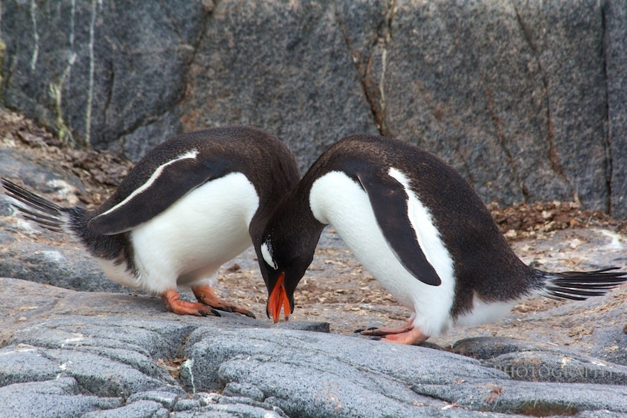 In sync penguins