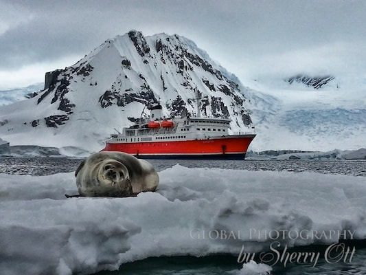 Cruising to Antarctica