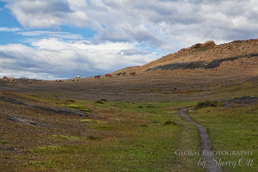 Horses roam along the trail