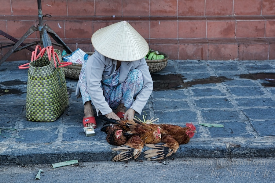market chicken vietnam