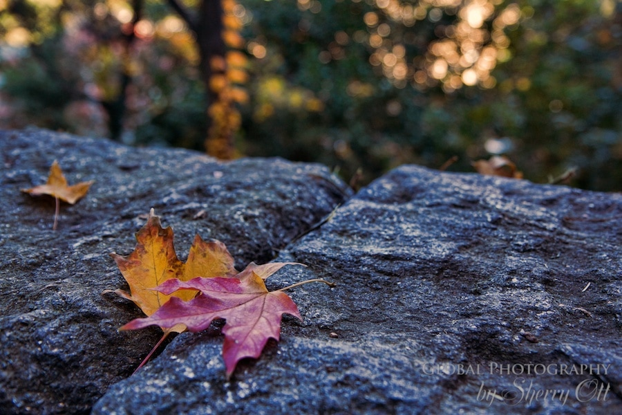 Autumn leaves fort tyron