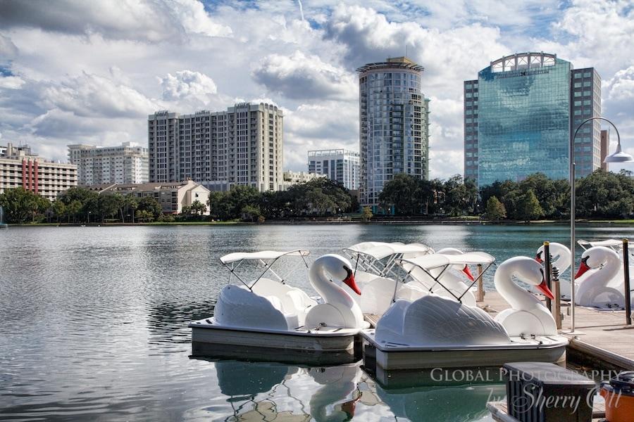 lake eola swans
