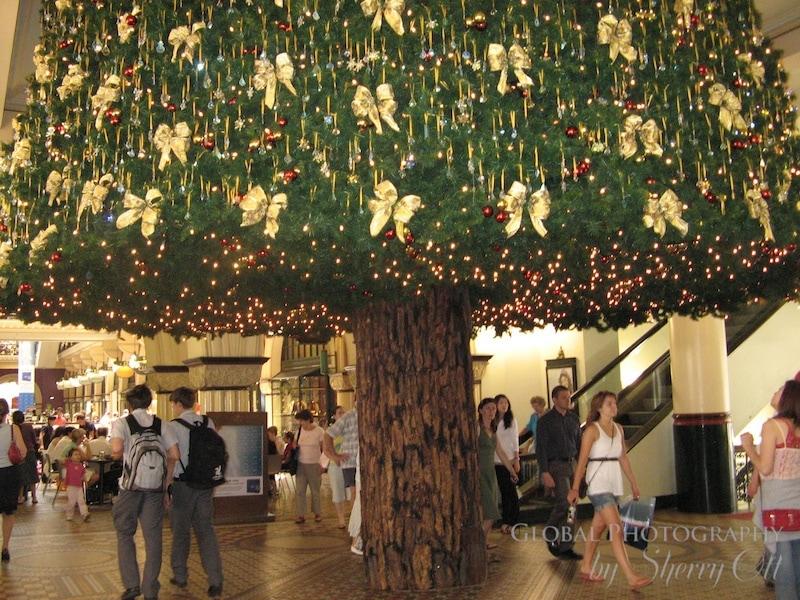 Christmas tree australia