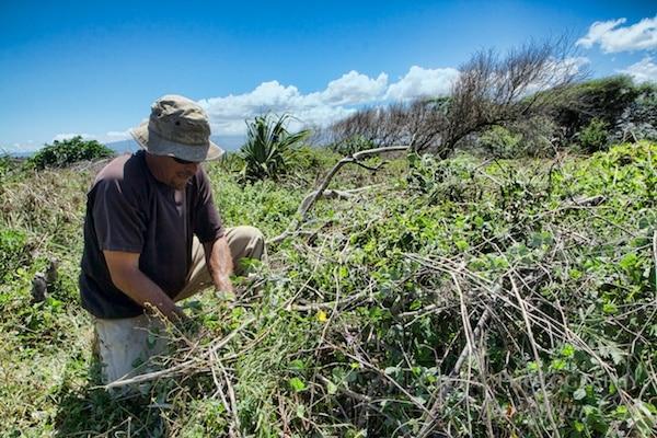 volunteer in hawaii with HILT on Maui