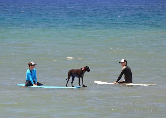 Luna surf dog maui