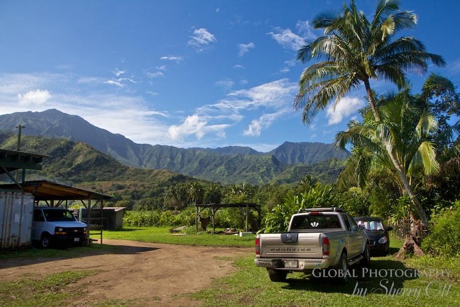 Waipa farm