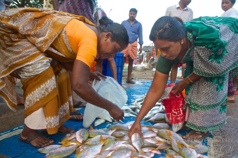 fish marketi india