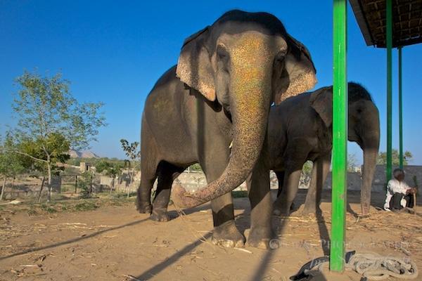 elephant park jaipur