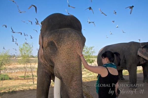 elephant jaipur