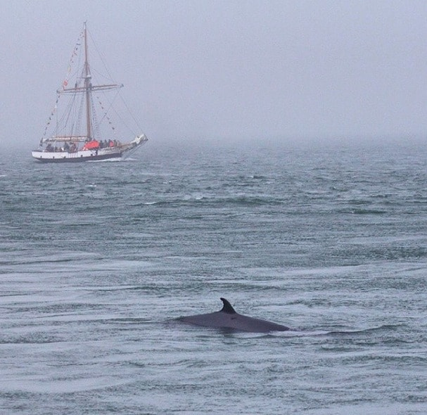 Whale watching Bay of Fundy