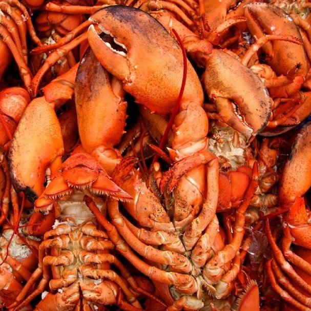 lobster new brunswick