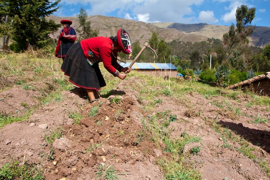 Sacred Valley potato farming