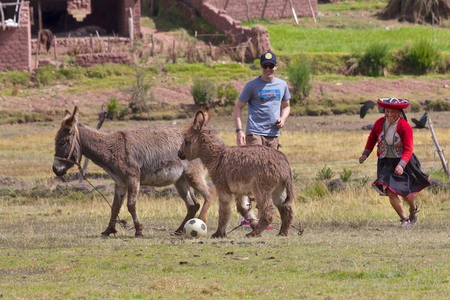 playing soccer among donkeys