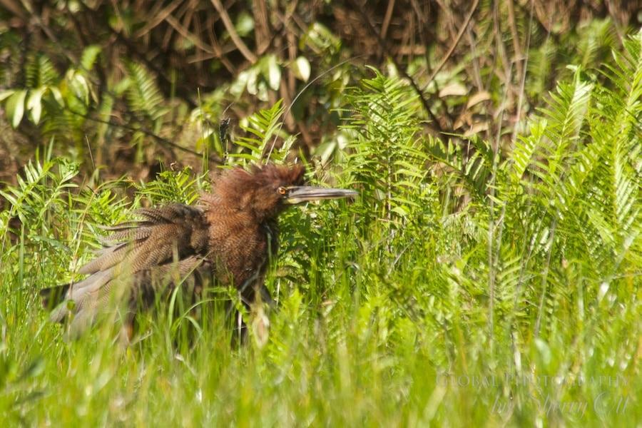 jungle wildlife peru