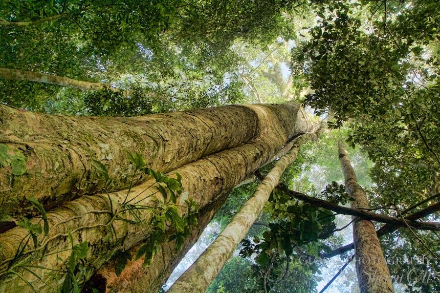 Jungle trekking in Peru