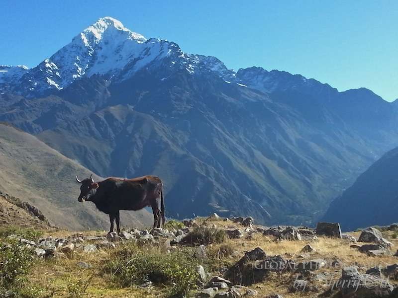 Andes Hiking