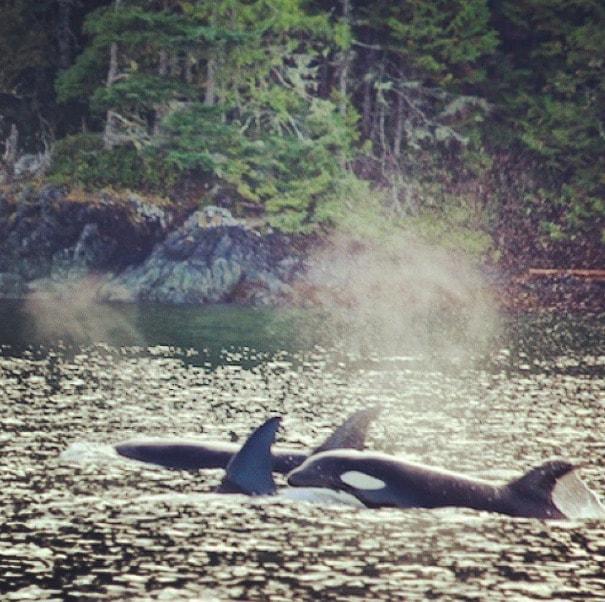 orcas telegraph cove