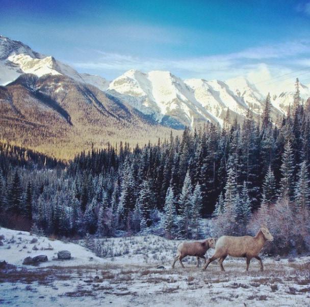 alberta landscape wildlife