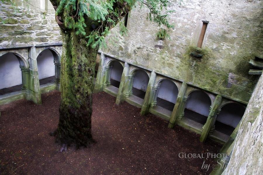Rainy day muckross abbey ireland