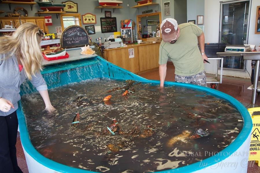 Canadian Lobster Market New Brunswick