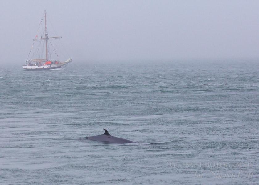 whales new brunswick