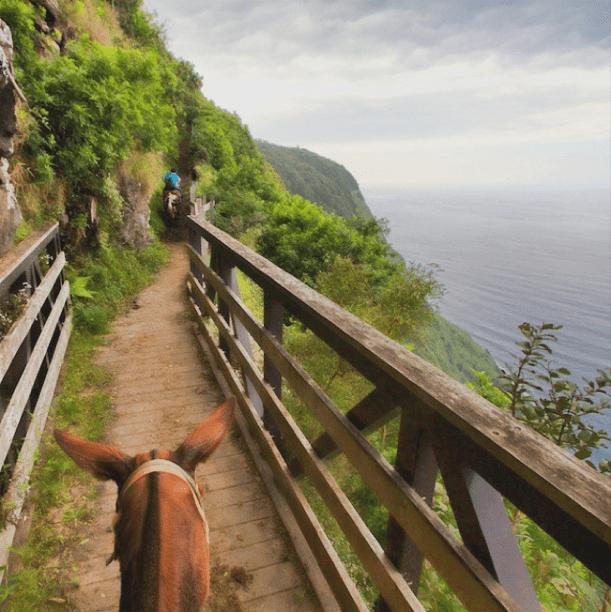 Molokai island mule ride