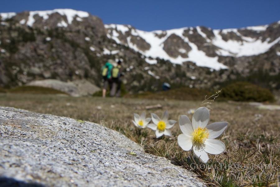 spring flowers spain