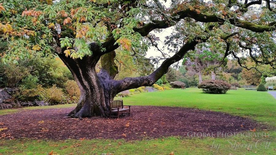 fall tree ireland