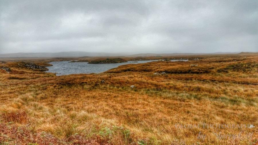 fall bog colors ireland